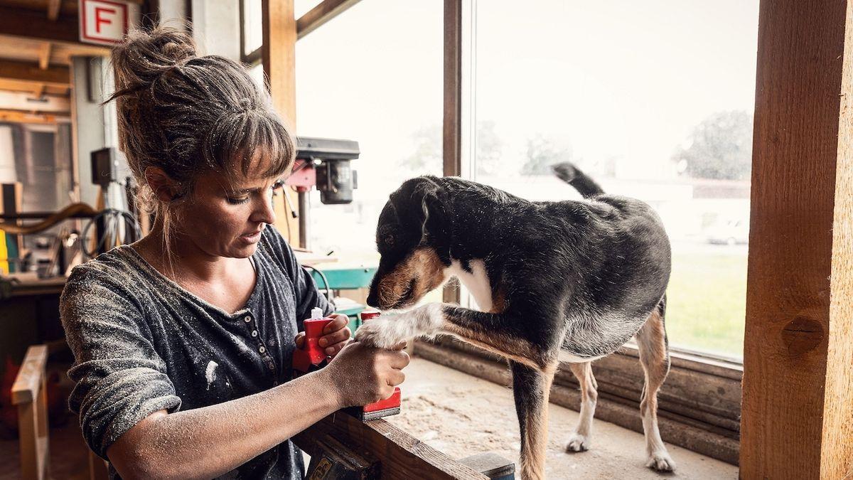 I psi mohou mít zažívací problémy. Víte, jak je v takové době krmit?