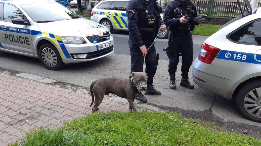 Špatně uvázaný pes zranil v Ostravě na zahrádce malé dítě