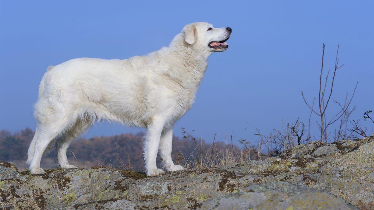 Pes utekl nedovřenými vrátky a kousl kolemjdoucí. Chovatel dostal podmínku