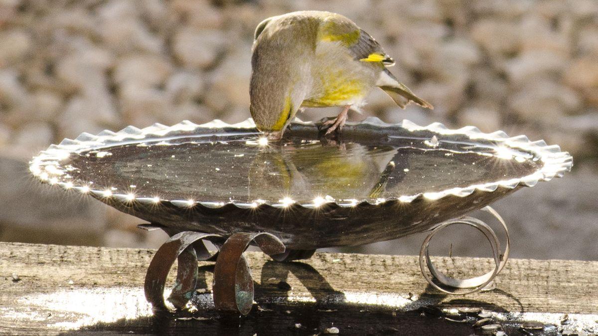 Udělejte radost ptáčkům a pořiďte jim napajedlo