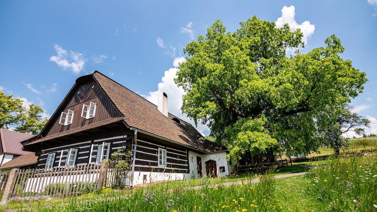 Zpívající lípa ze Svitavska je Stromem roku 2021